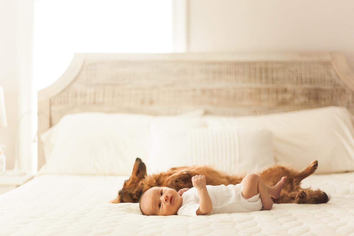 Newborn Photographers Dog Baby